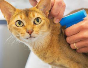 прививки животным на дому цены
